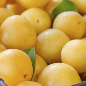 collection - les atypiques - fruits jaunes